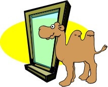 a camel at the window
