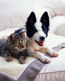 cat and dog sitting together on bed