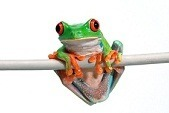 Croaky the frog on a branch