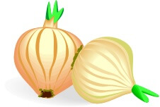 two clipart onions